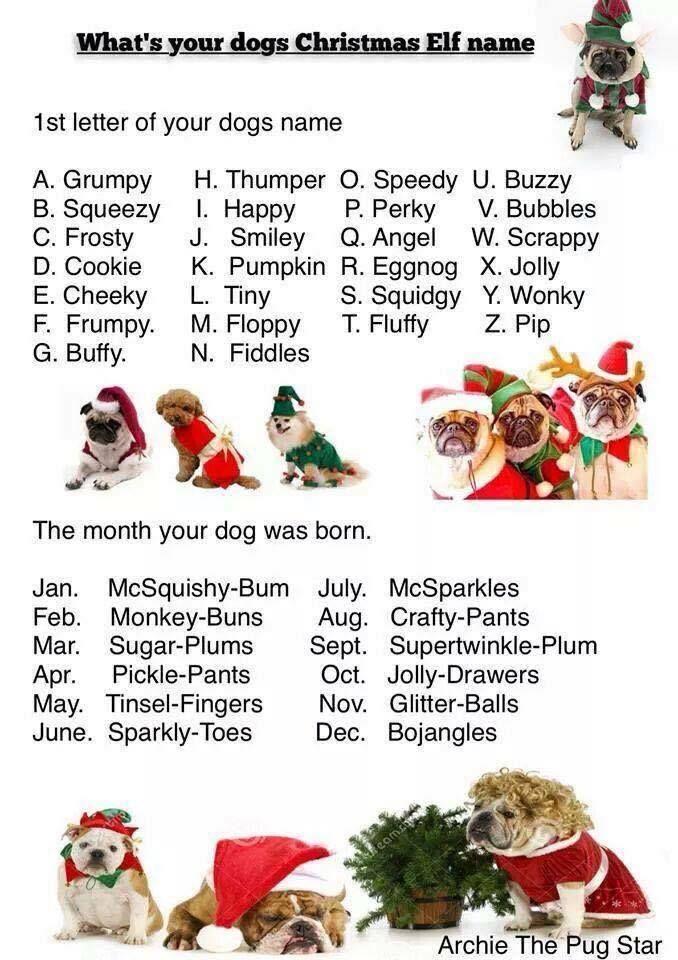 whats your dogs x mas elf name christmas elf names - Christmas Pet Names