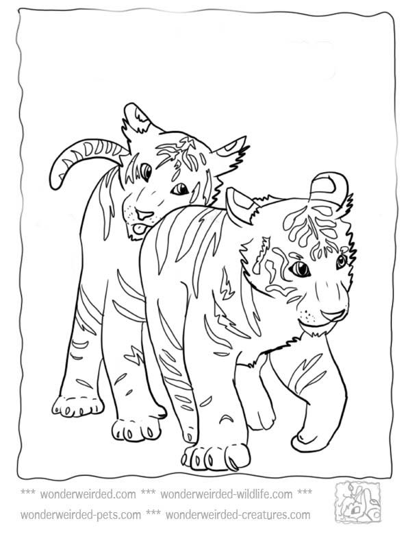 Baby Tiger Coloring Pages At Wonderweirded Wildlife