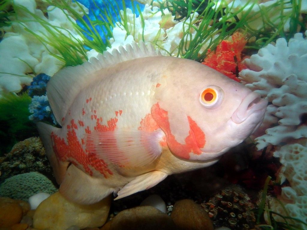 Best Fish Images On Pinterest Aquatic Turtle Tank Beautiful - Beautiful photography reveals underwater complexity aquariums