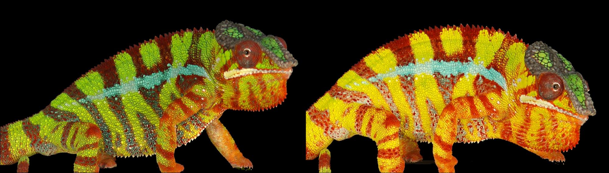 Картинки меняющие цвет при открытии