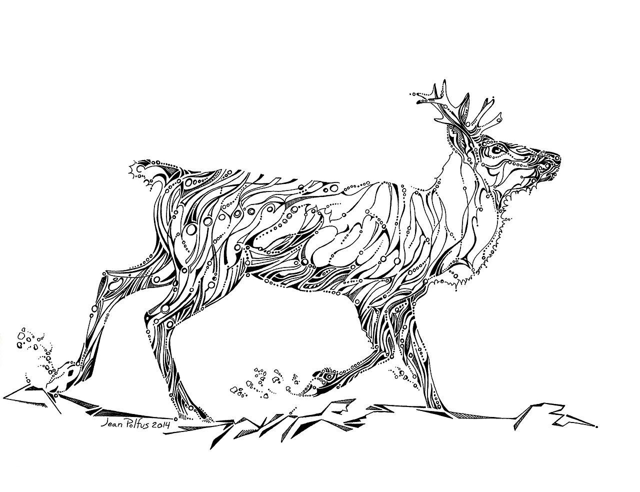 http://jeanpolfus.tumblr.com – Jean Lieppert Polfus | Chr | Animals ...