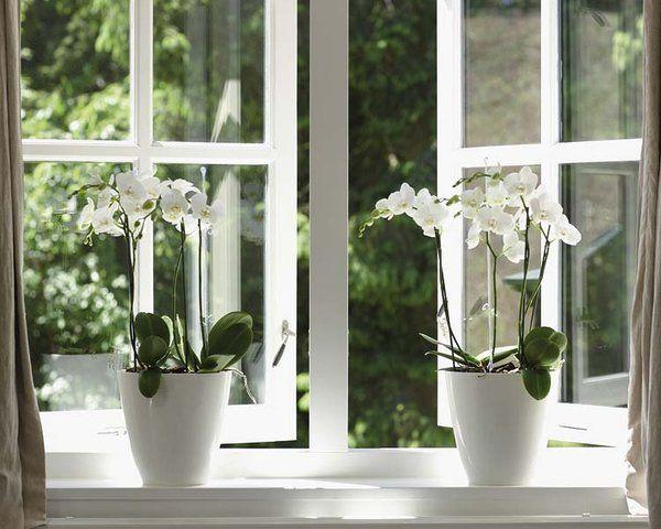 la decoración con un toque de magia | macetas, ventana y magia