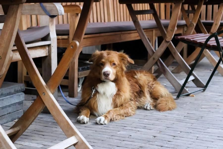 Pet Friendly Napa Valley Cuisine With Your Canine The Visit Blog Napavalleywineries