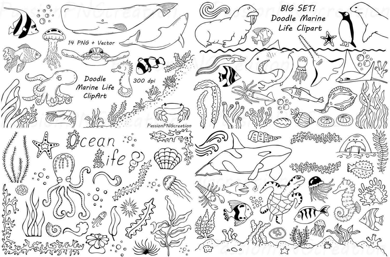 Big Set of Doodle Marine Life Clipart, Sea Life clip art, Ocean life ...