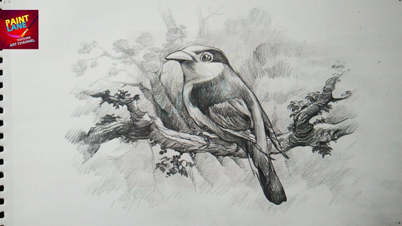How To Draw A Bird With Pencil Drawing Shading Bird Drawings Sketches Drawing Sketches