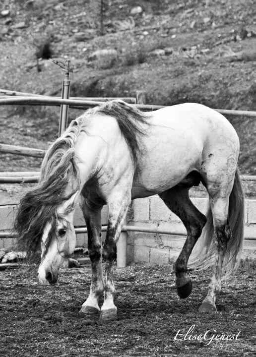Elise Genest photography   Horse List   Pinterest   Horses
