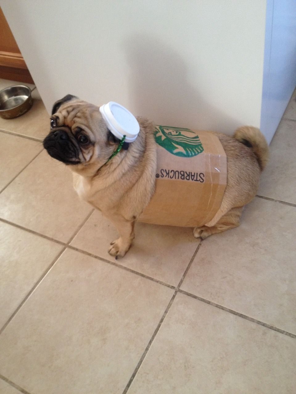 Little Latte S Costume This Year Cute Pugs Funny Animals Dog Puns