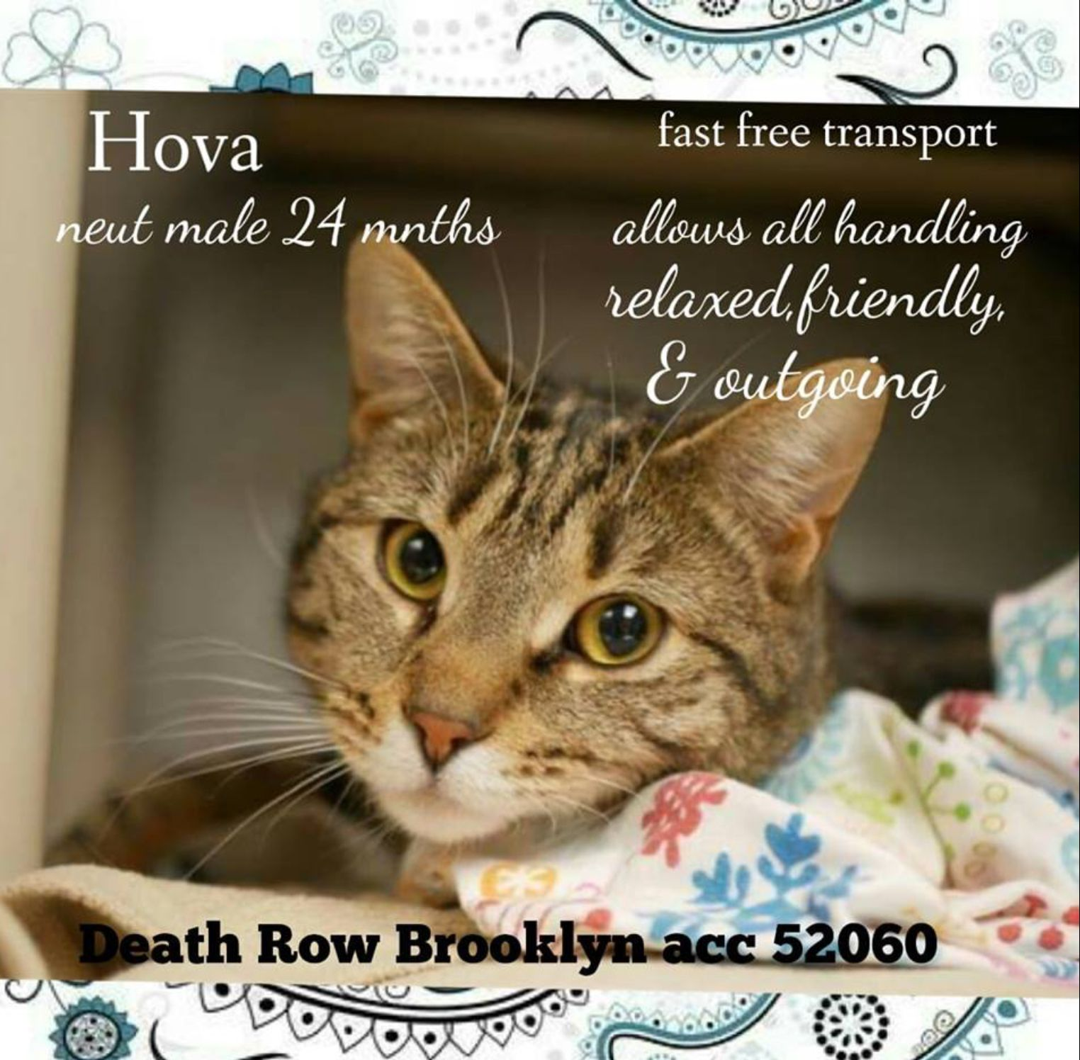 HOVA PULLED BY CATS IN THE CRADLE RESCUE💛💛01/14/19 TO