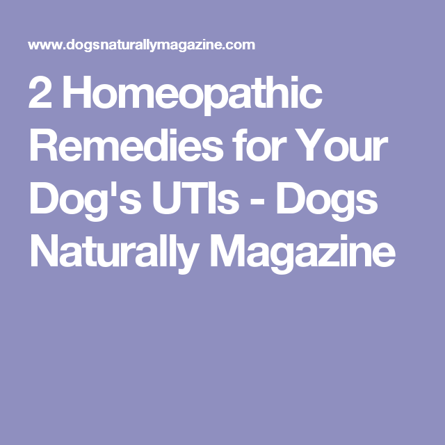 2 Homeopathic Remedies For Your Dog S Utis Sookie Amp Roscoe