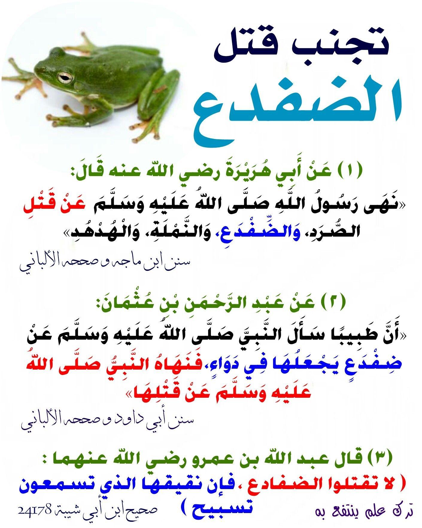 حكم قتل الضفدع Quran Quotes Islamic Quotes Quran Hadith Quotes
