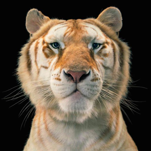 Photographer  Tim Flach Takes Stunningly Simple Photos to Show Human and Animal Similarities