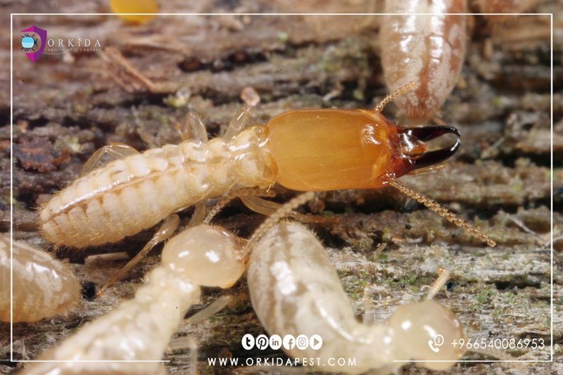howto to get rid of Termites Easy solutions to