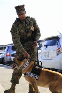 marine corps dog handler