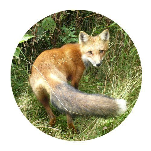 a4dcf33f7a623 $16.48 Wild Fox Personalized Round Mouse Pad:Amazon:Cell Phones ...