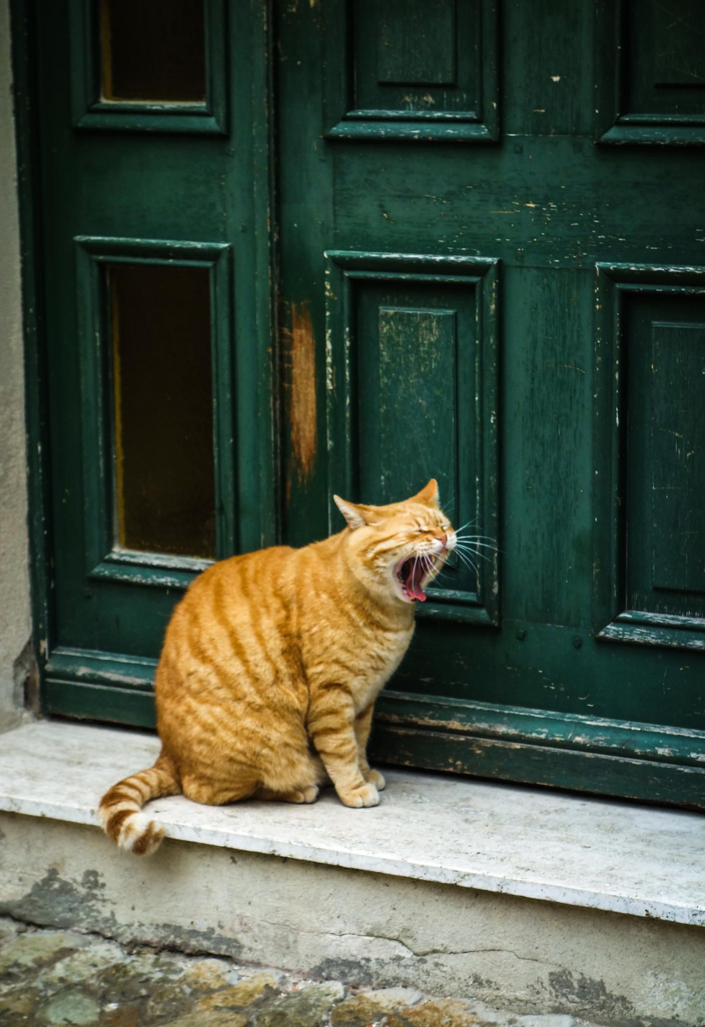 It S Been A Long Day Cat Yawning Cats And Kittens Tabby Cat