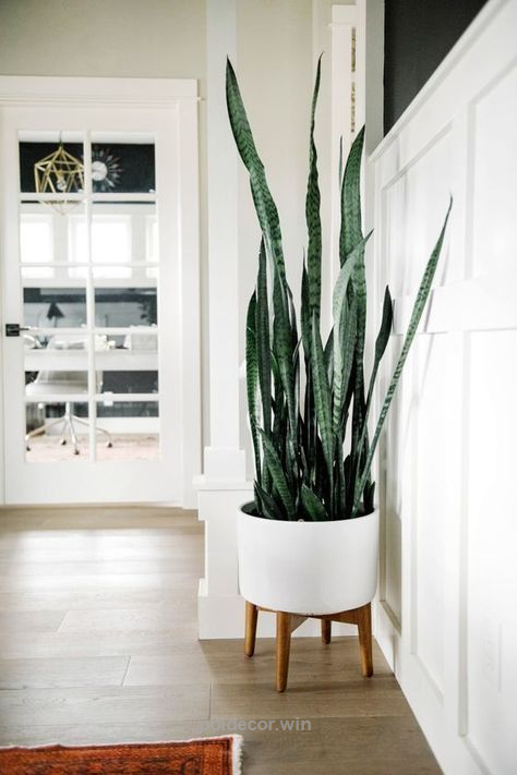 snake plant sansevieria trifasciata houseplants leedy interiors nj rh pinterest es