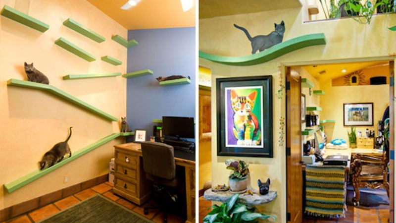 A $35,000 Renovation Turned This Suburban Home Into a Cat Palace