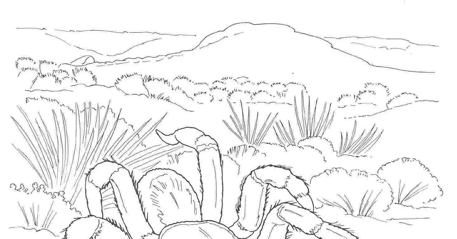 Desert Landscape Desert Coloring Pages