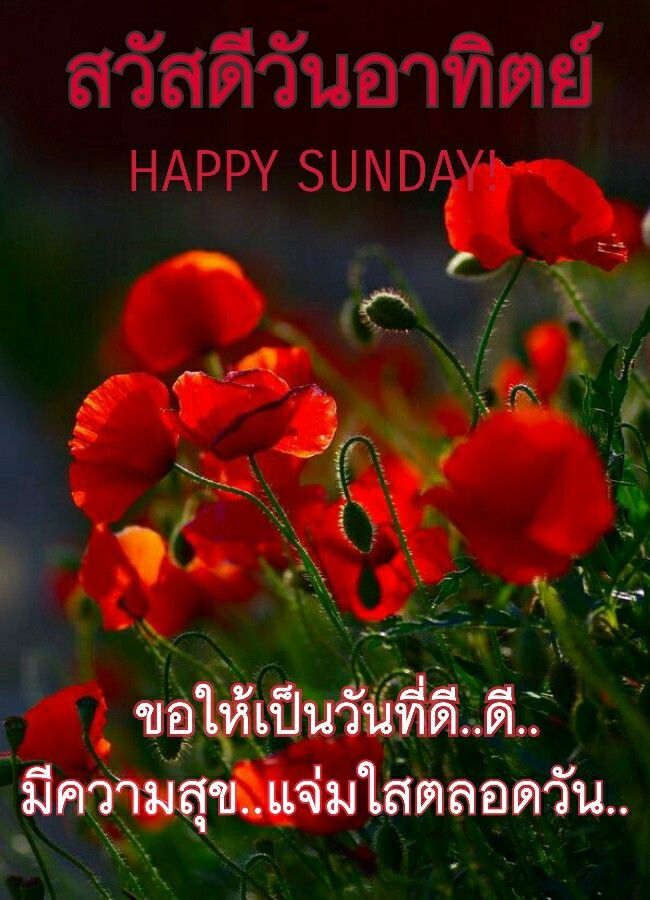 Pin by manatsanan worrakhunphiset on good morning pinterest explore poppy flower meaning red poppies and more mightylinksfo