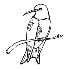 Swallow Coloring Pages For Kids Preschool And Kindergarten
