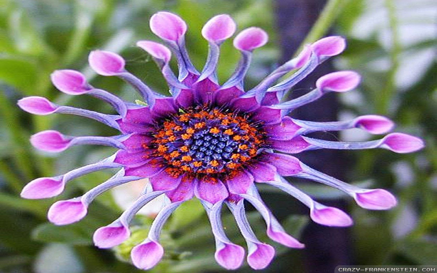 Exotic flowers youtube flowers pinterest exotic flowers of exotic flowers youtube izmirmasajfo