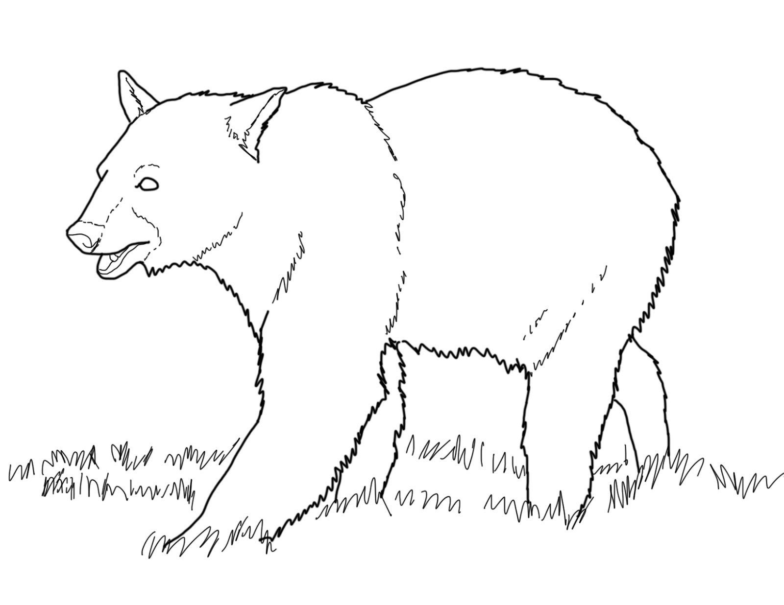 Learn Forest Animals Coloring Pages Grizzly Bear