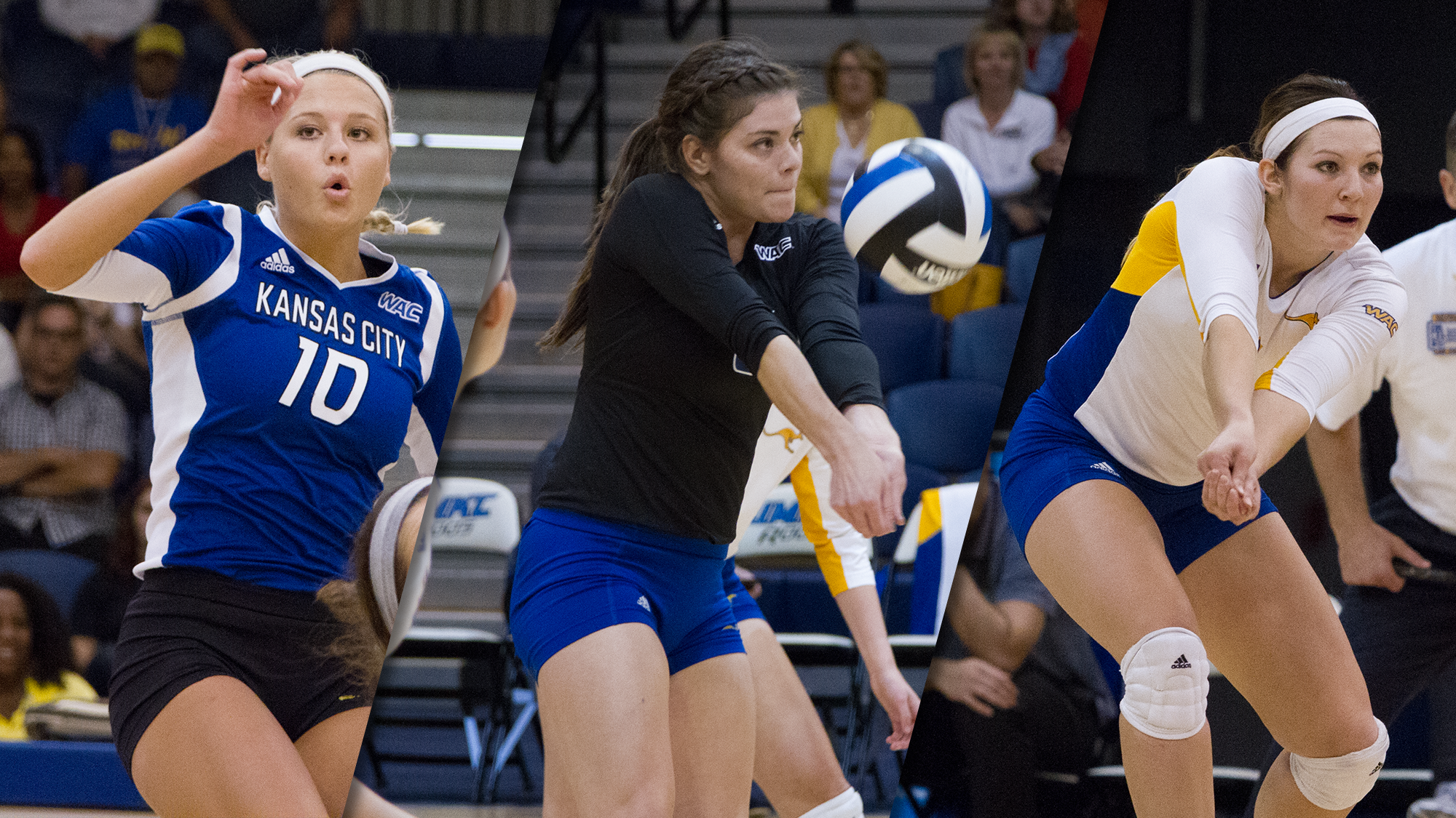 Trio Of Roos Earn All Wac Volleyball Honors Female Volleyball Players Professional Volleyball Players Volleyball