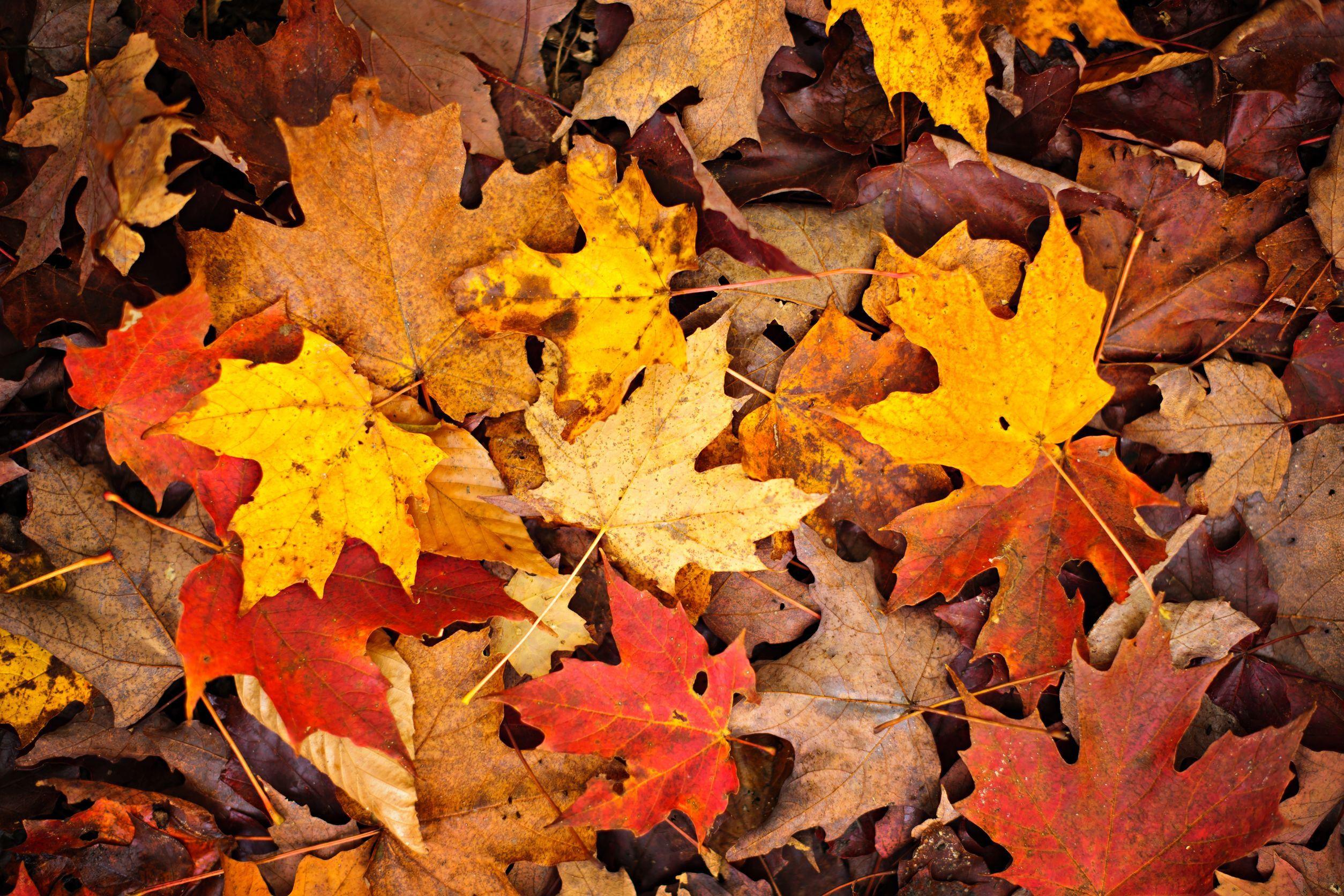 Fall Rug Wallpaper Autumn Leaves Sky September October November Bye