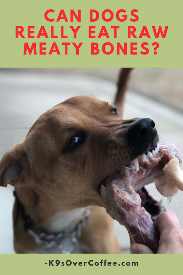 Can Dogs Really Eat Raw Meaty Bones? Dog raw diet