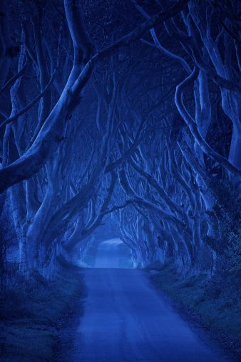 The Dark Hedges  A Country Road In County Antrim Northern