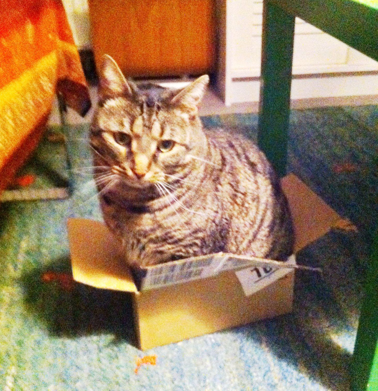 Better a small box than no box!