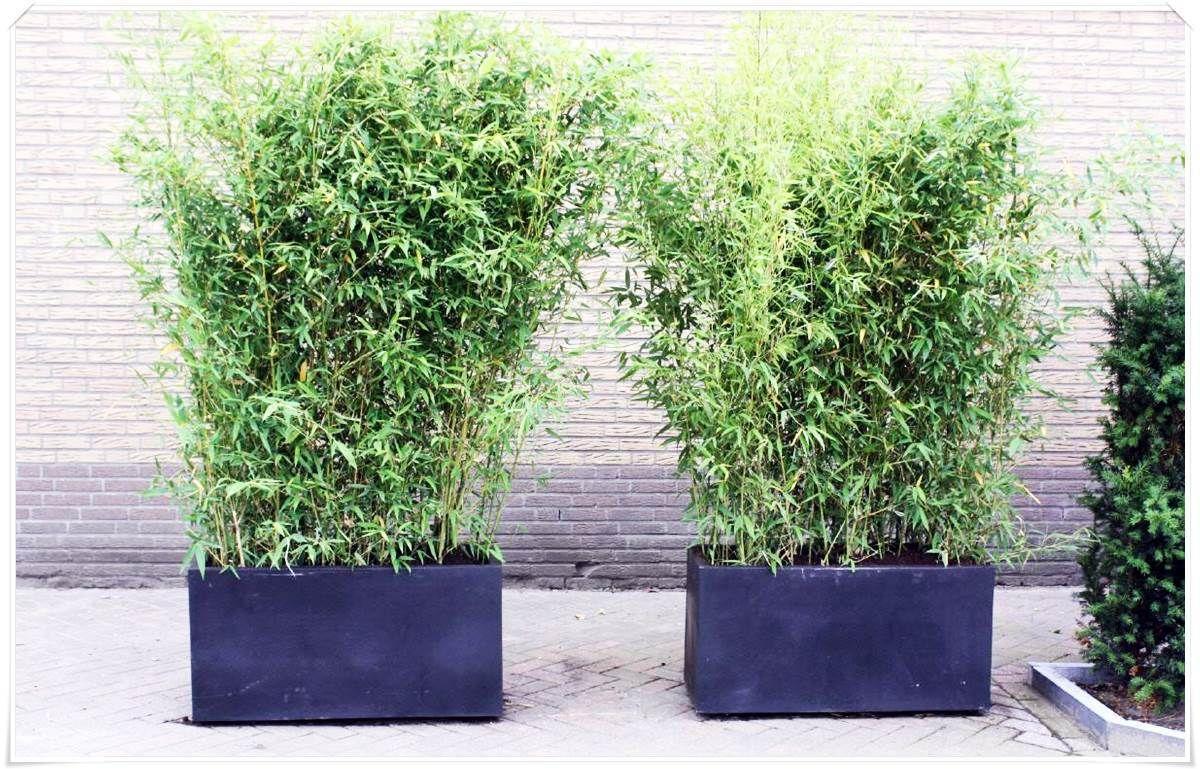 Bildergebnis für terrasse kübel bambus garden
