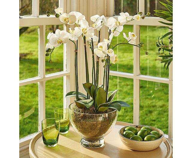 Grand Phalaenopsis Centrepiece