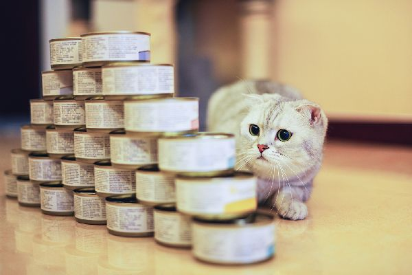 Can Cats Eat Tuna? The Answer Is Complicated Cat