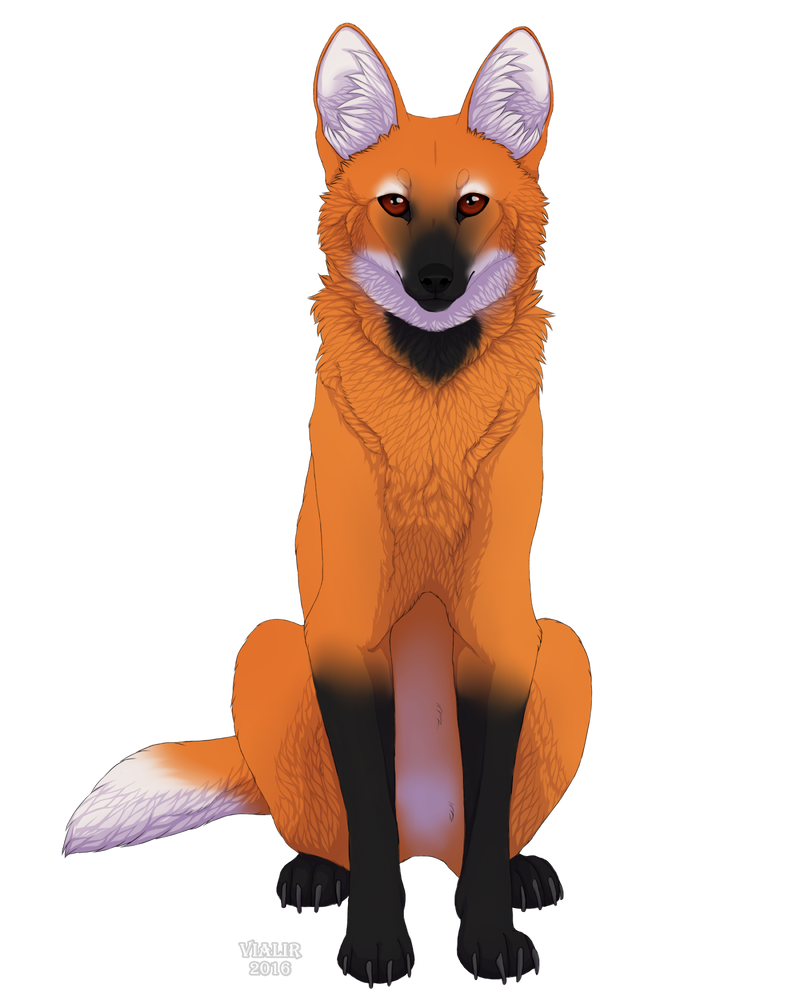 Maned Wolf By Vialir Maned Wolf Big Cats Art Animated Animals