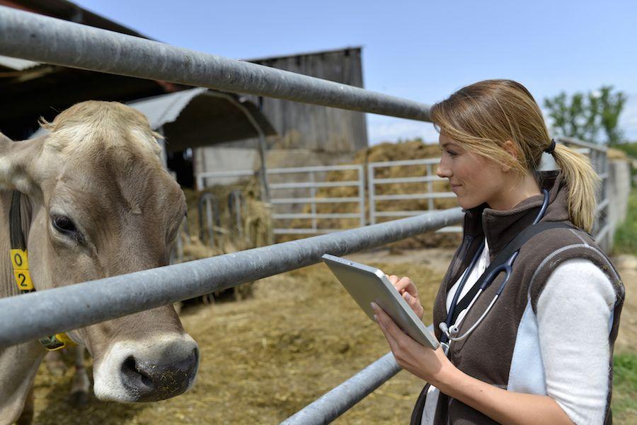 Top Scholarships for Veterinary School Students