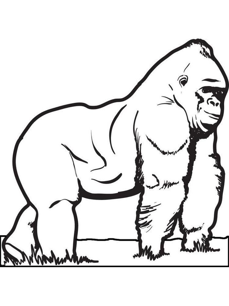 Gorilla (Dengan gambar)