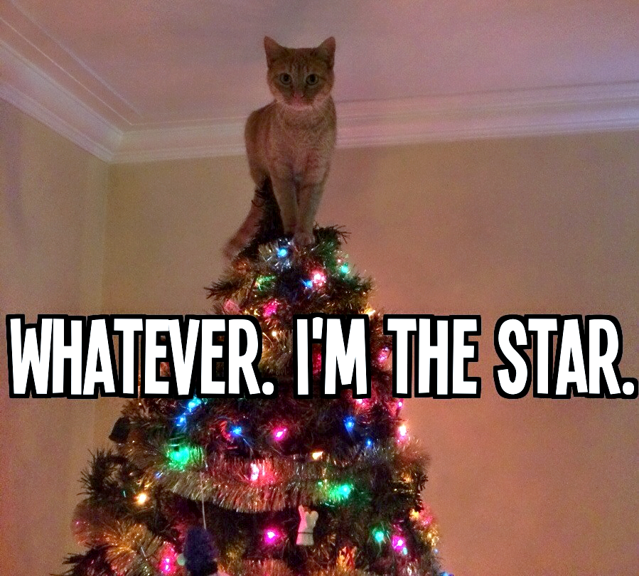 Huggable Friends I M The Star Christmas Cats Cats Funny Animal Pictures