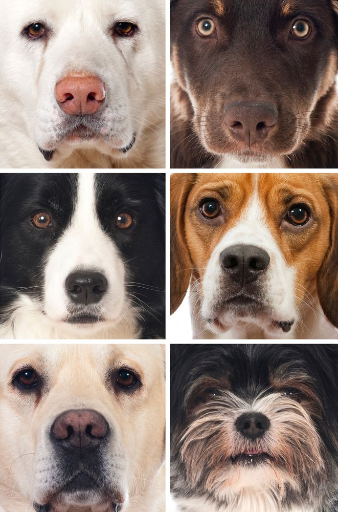 Know your dog breeds? Take the quiz Dog breeds, What