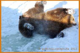 Karhut ovat todella heränneet