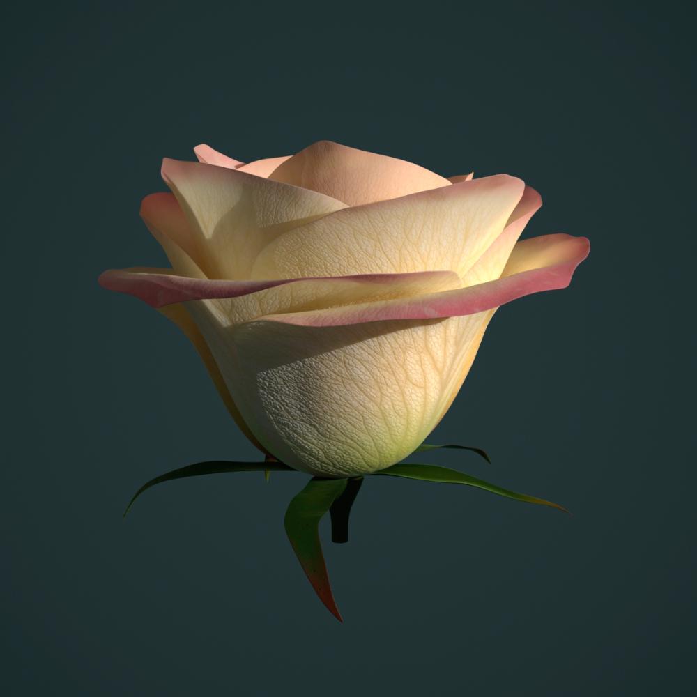 3d Rose Animation Turbosquid 1252440