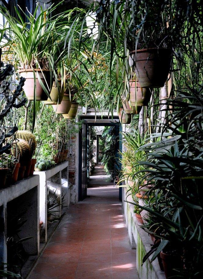 """Padua's Botanical Garden is a 'hortus conclusus', a """"walled garden"""". #botanicgarden"""