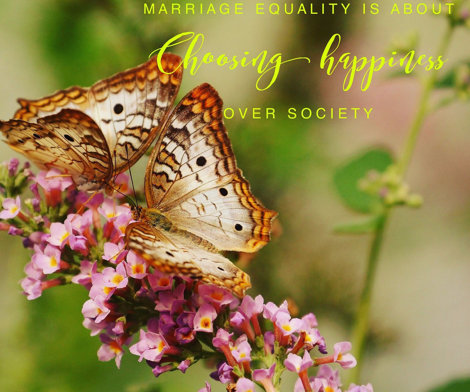 WebWed In the face of love, everyone is equal. Let