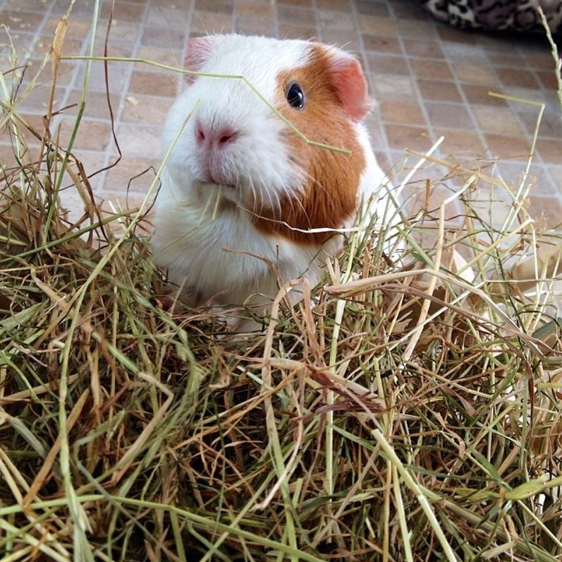 enjoying some yummy hay