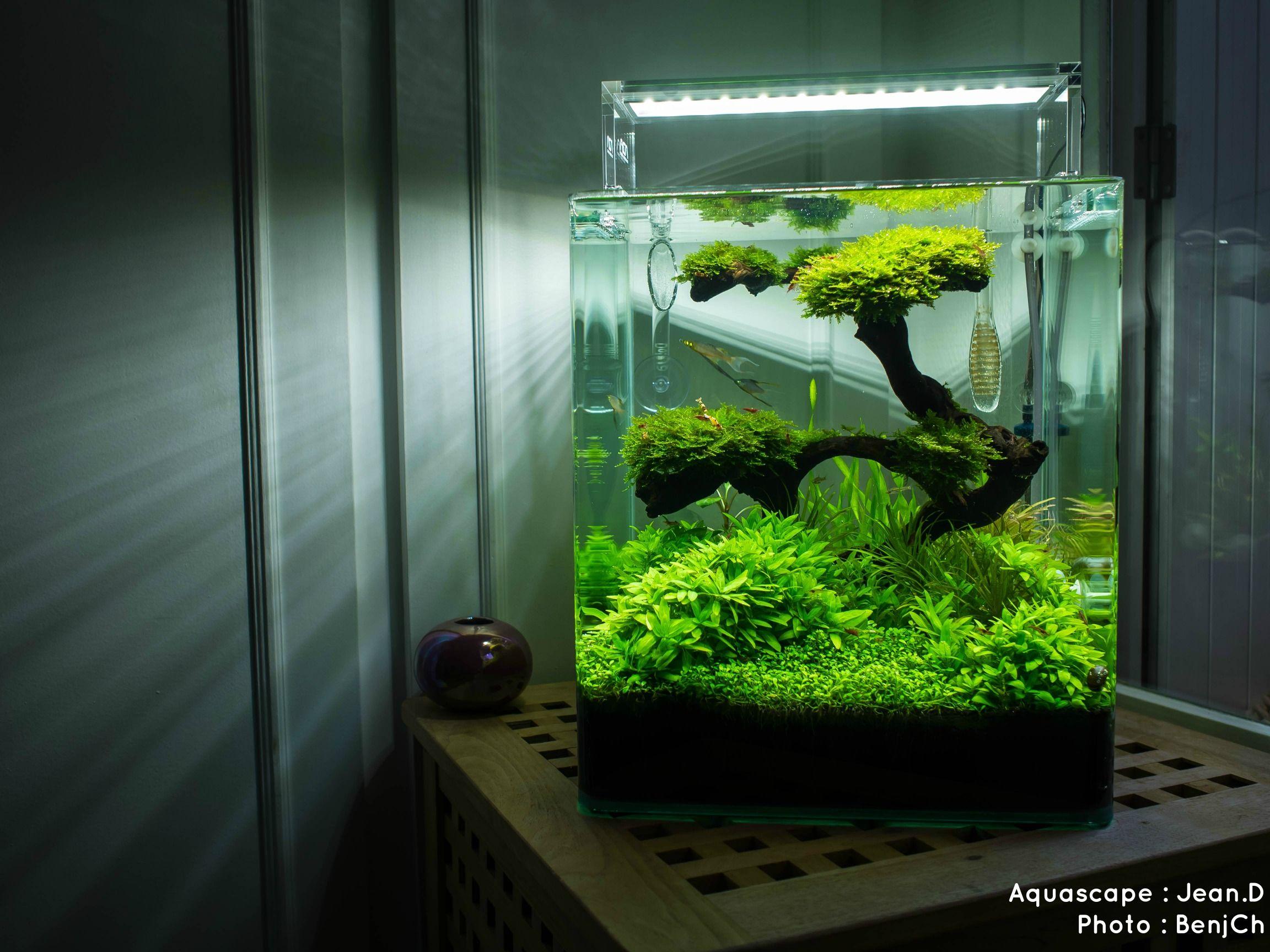 aquariums d 39 eau douce aquarium cube pinterest aquarium aquarium poisson et sous verre. Black Bedroom Furniture Sets. Home Design Ideas