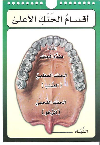 صور مخارج الحروف العربية للدكتور أيمن سويد حفظه الله الإسلام اليوم Learn Quran Learning Arabic Tajweed Quran