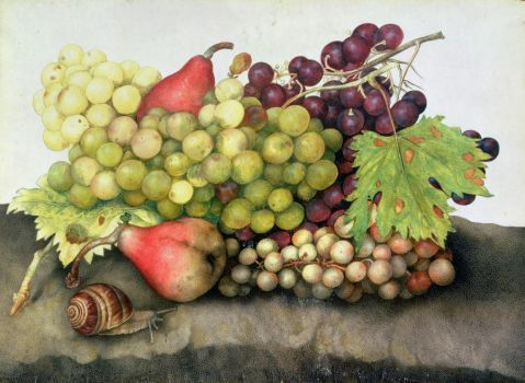 Snail with Grapes and Pears - Giovanna Garzoni (63 pieces)