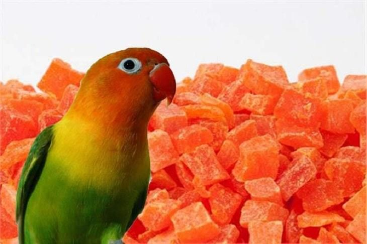 Mengetahui Ragam Manfaat Pepaya Kering Untuk Burung Paruh Bengkok Pepaya Burung Jalak