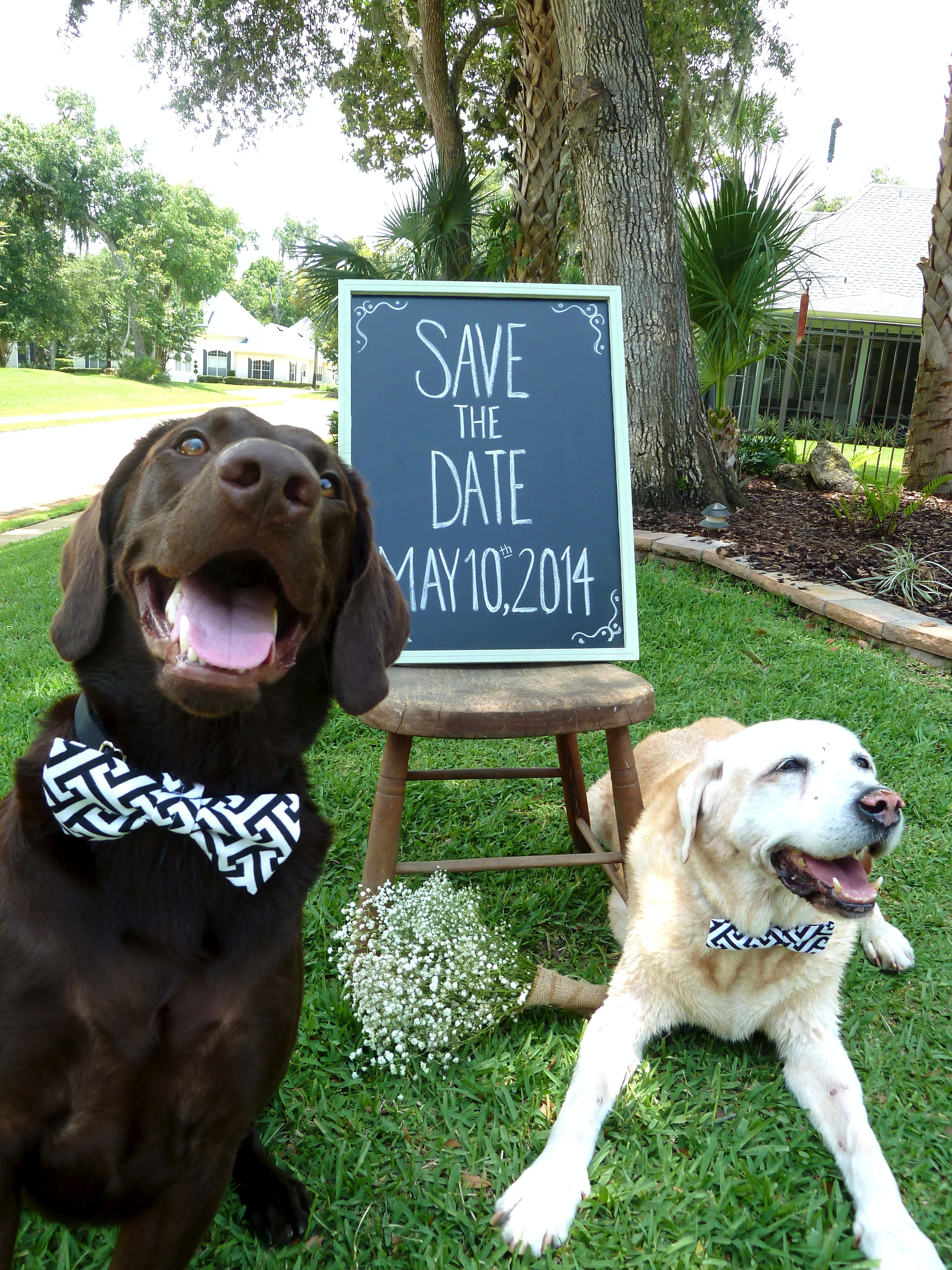 save the date with dogs photos, I also like the idea of having ...