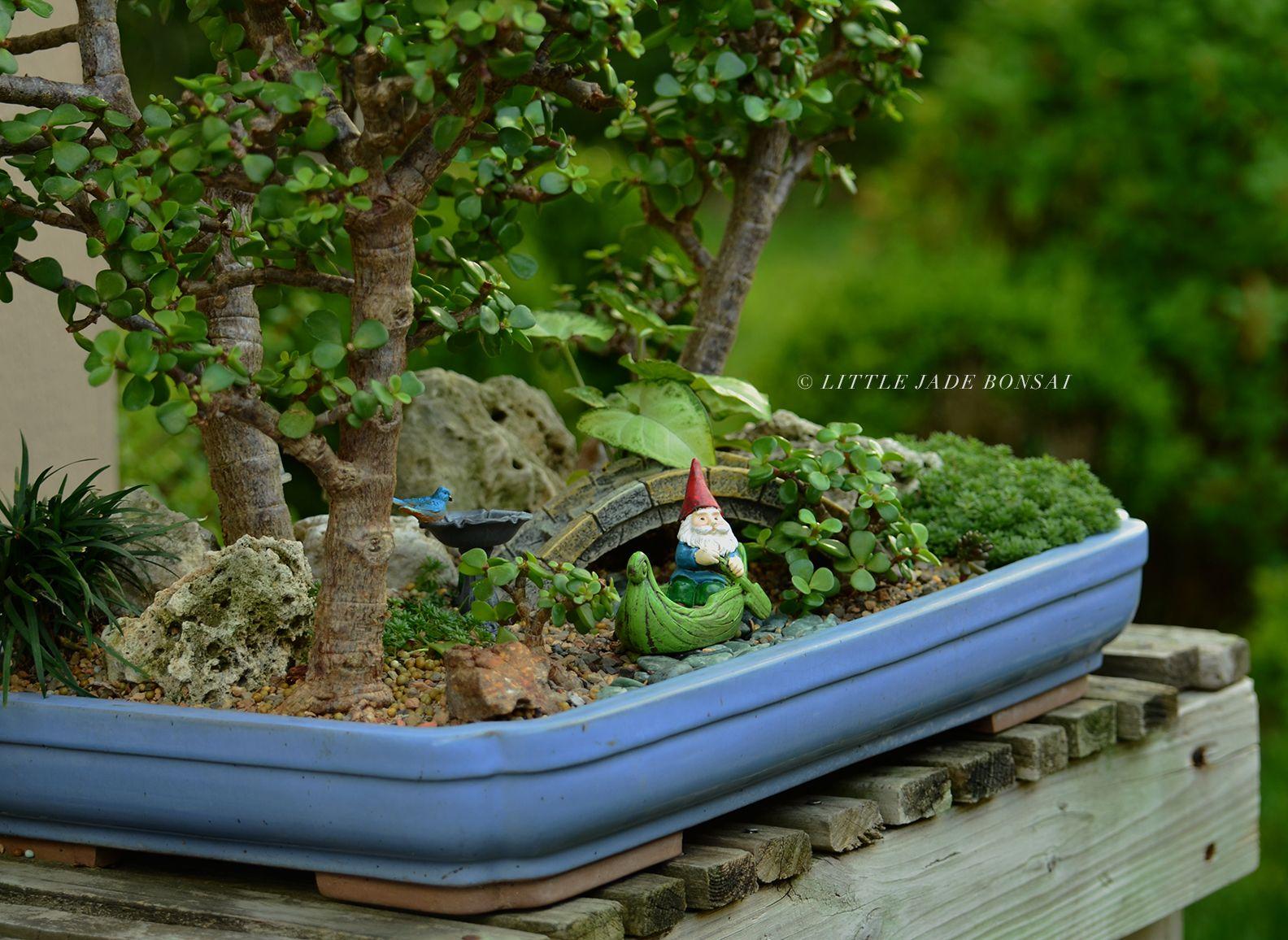 Fairy Garden Bonsai Forest By Little Jade Bonsai